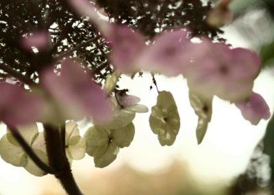 pflanzenbild hipp 6